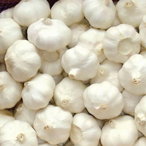 Garlic 250 gm রসুন 250 গ্রাম