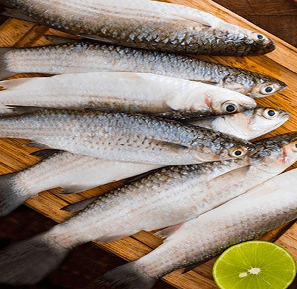 PARSHE FISH 10-12 pic/ Kg (পারশে মাছ 10-12 পিচ/ Kg